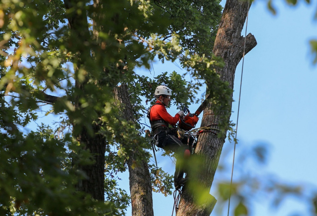 How much does it cost to remove a tree?